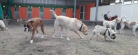 Pandya's Dog Training , Dog Boarding & Dog Walking Services
