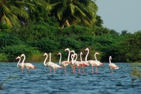 Find and compare the best Kerala tour packages from Mumbai