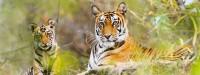 Sundarban Houseboat Luxury Tour Package