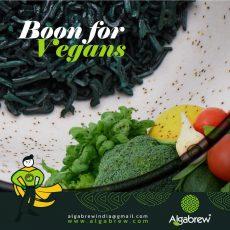 Algabrew - Organic Spirulina Powder and Nibs Manufacturers & Suppliers