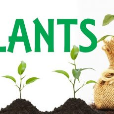 PLANTS - INCREASING THE NUMBERS