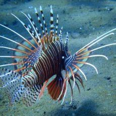 Scuba Diving in Goa - Scuba Diving Tours